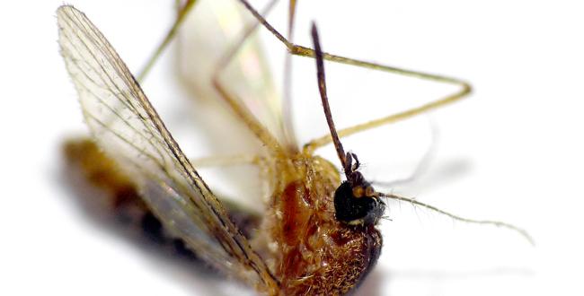 Nên và không nên khi phòng tránh muỗi - ảnh 2
