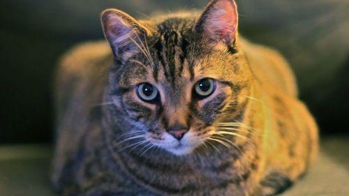 Mù vì bị mèo liếm mắt - ảnh 1