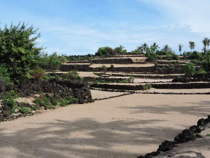 Hút hồn vẻ đẹp ruộng bậc thang giữa biển Đông - ảnh 5