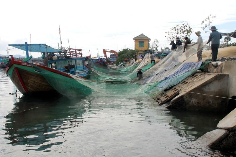 Ngư dân Hòn Rớ nô nức được mùa cá cơm - ảnh 6