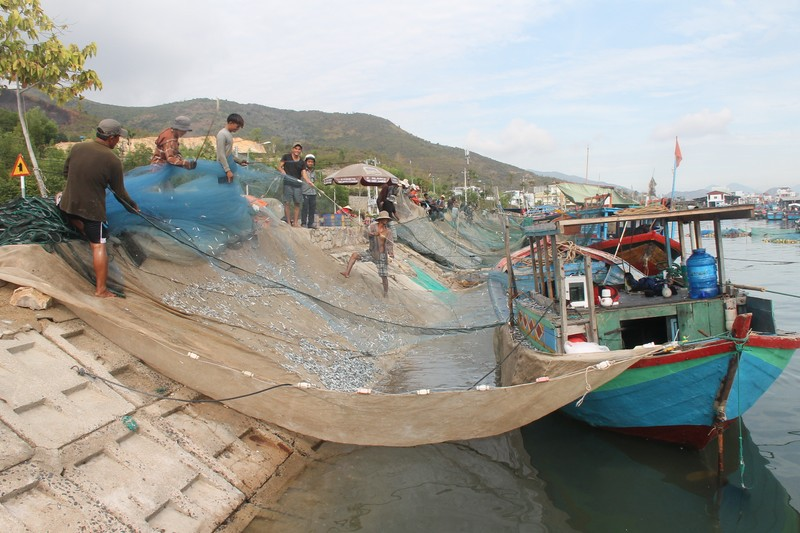 Ngư dân Hòn Rớ nô nức được mùa cá cơm - ảnh 1