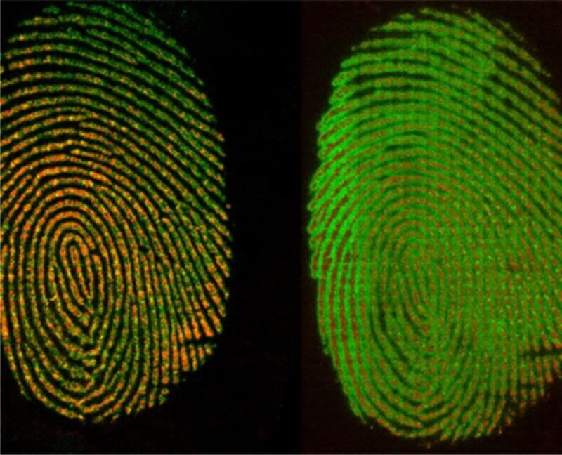 Cách mới giúp xác định đúng thời điểm dấu vân tay tại hiện trường - ảnh 1