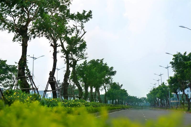 Khu đô thị sinh thái Hòa Xuân: Giá mềm, tiện nghi - ảnh 1