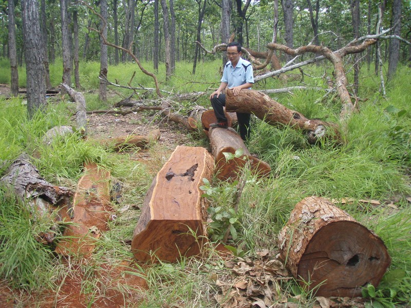 Lâm tặc tấn công kiểm lâm cướp gỗ tang vật  - ảnh 1