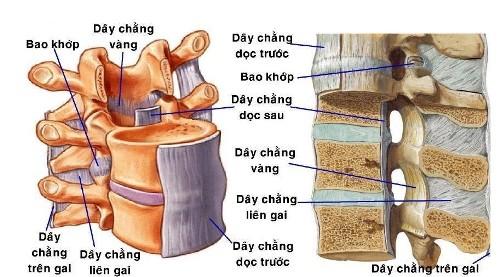 Đau tê từ bụng xuống chân coi chừng bị hẹp ống sống ngực - ảnh 1