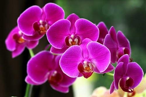 Ý nghĩa của 10 loại hoa, cây cảnh thường trưng dịp Tết - ảnh 10