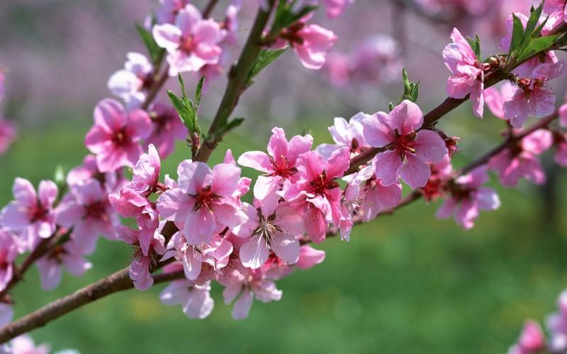 Ý nghĩa của 10 loại hoa, cây cảnh thường trưng dịp Tết - ảnh 2
