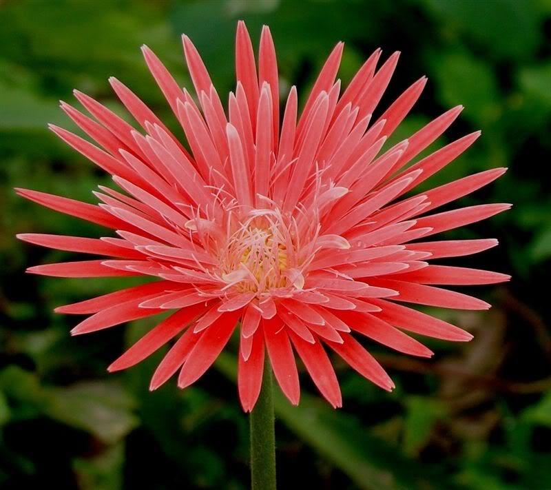 Ý nghĩa của 10 loại hoa, cây cảnh thường trưng dịp Tết - ảnh 5