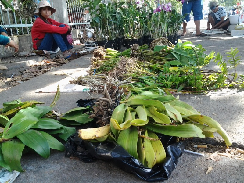 Lan rừng 'về phố' họp chợ ngày Tết - ảnh 1