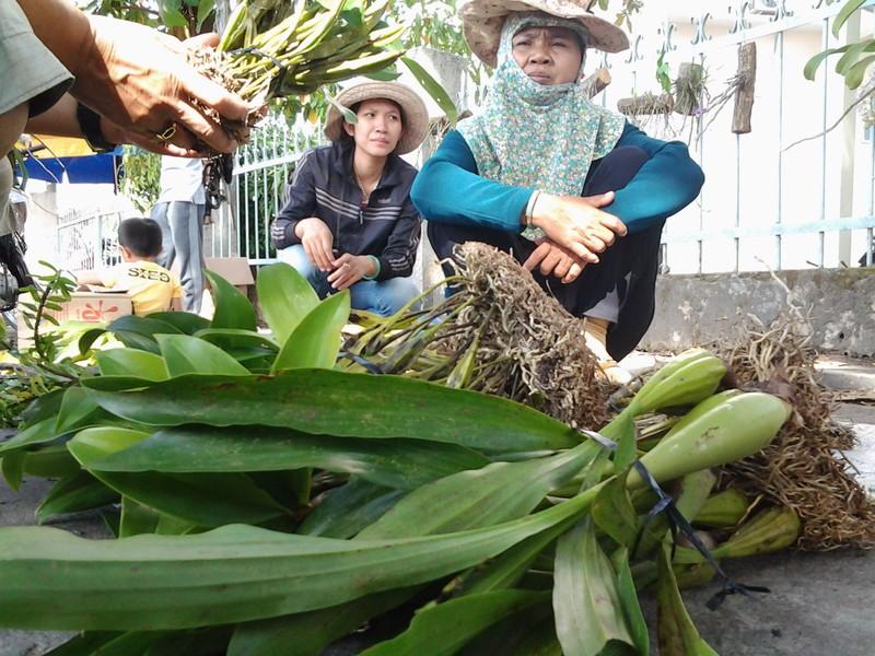 Lan rừng 'về phố' họp chợ ngày Tết - ảnh 2