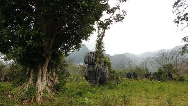 Đoàn làm phim 'King Kong' vất vả dưới mưa rừng nhiệt đới - ảnh 8