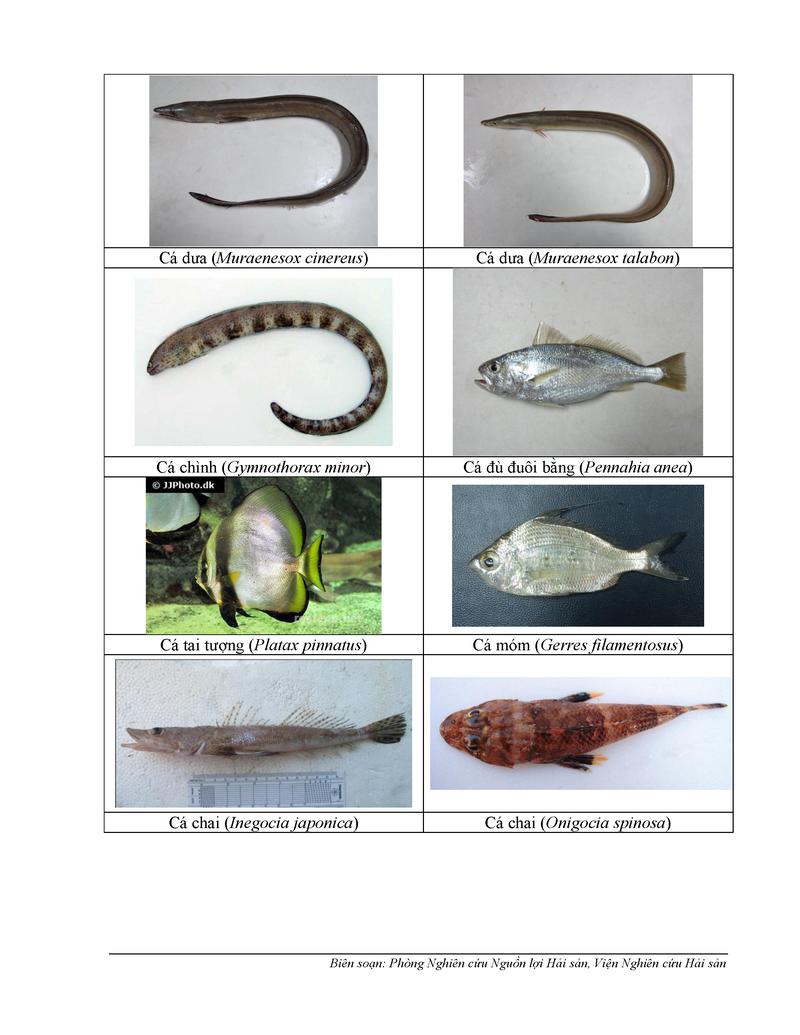 154 loại hải sản miền Trung khuyến cáo chưa được ăn-P3 - ảnh 2