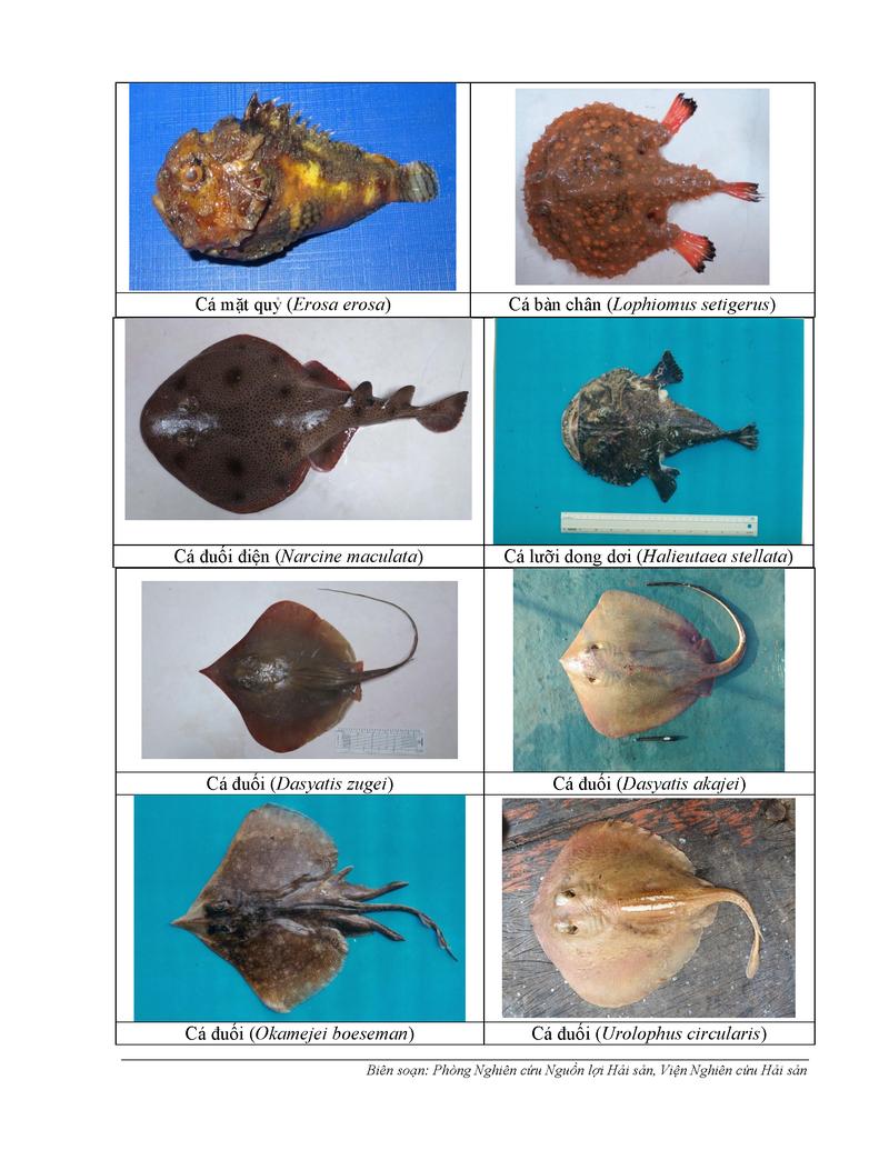 154 loại hải sản miền Trung khuyến cáo chưa được ăn-P5 - ảnh 1