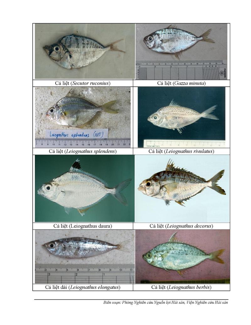154 loại hải sản miền Trung khuyến cáo chưa được ăn-P8 - ảnh 1