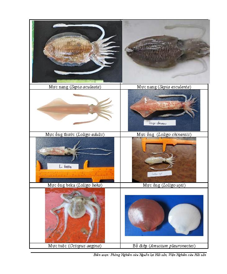 154 loại hải sản miền Trung khuyến cáo chưa được ăn-P8 - ảnh 2