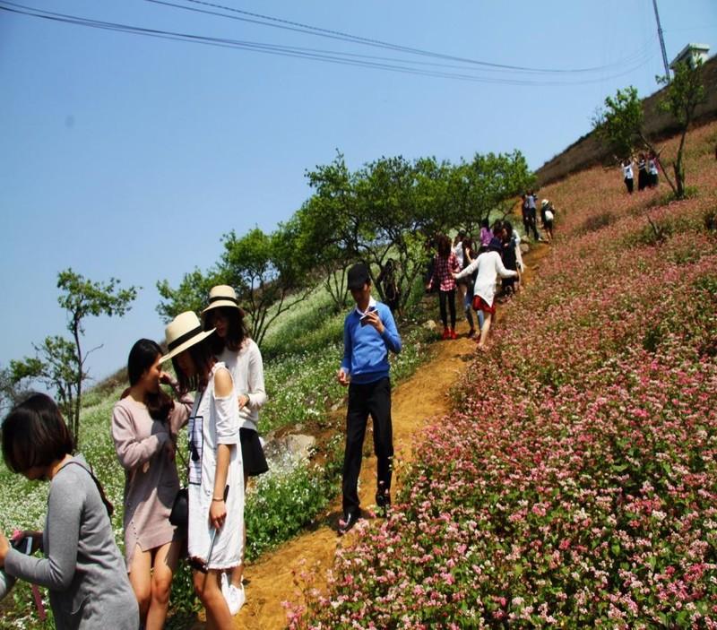 Mùa hoa nở, khách đến tham quan, chụp hình, ngắm hoa rất đông.
