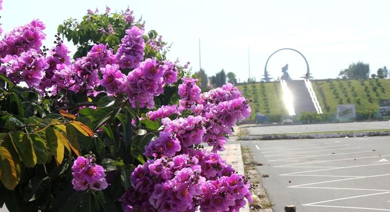 Mùa hoa bằng lăng tím ngát bên Vòng tròn bất tử - ảnh 2