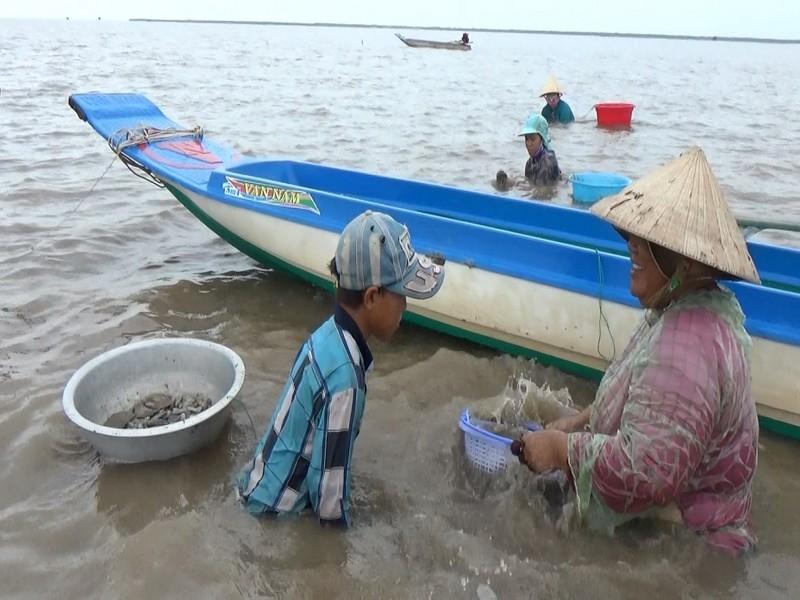 Khởi tố 10 ngư dân Cà Mau vì trộm sò huyết - ảnh 1
