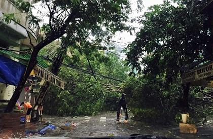 Cây đổ tại phố Hàng Bún, Nguyễn Thái Học (trên facebook Nguyễn Kinh Quốc)
