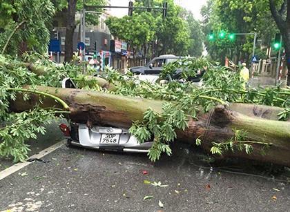 Cây đổ đề bẹp xe ô tô tại ngã tư Hai Bà Trung - Quang Trung vào sáng nay (ảnh Facebook Huy)