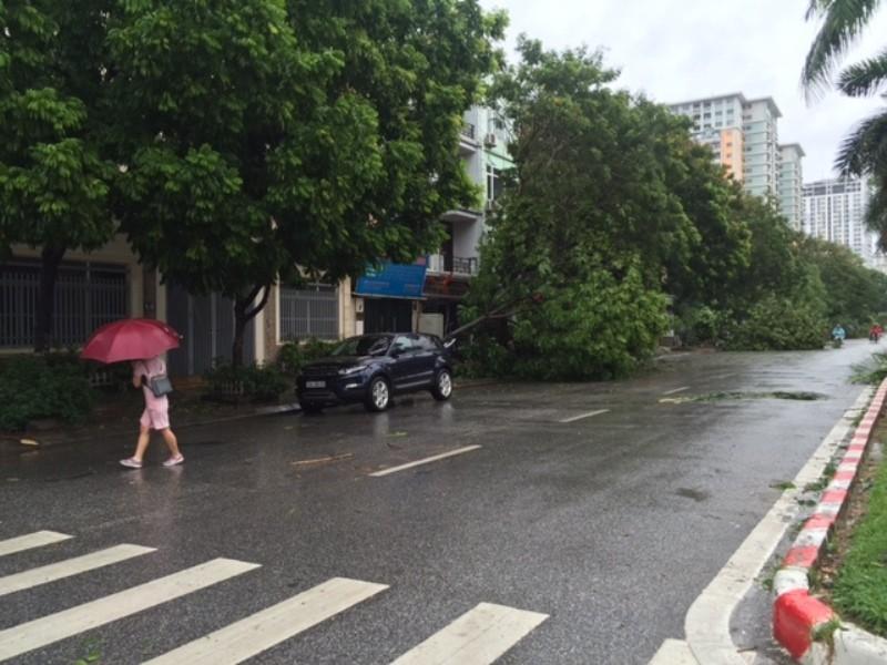 Bão số 1 tràn về Hà Nội: Cây đổ tan hoang - ảnh 7