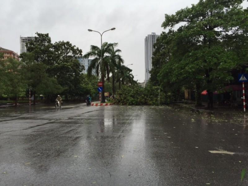 Bão số 1 tràn về Hà Nội: Cây đổ tan hoang - ảnh 8