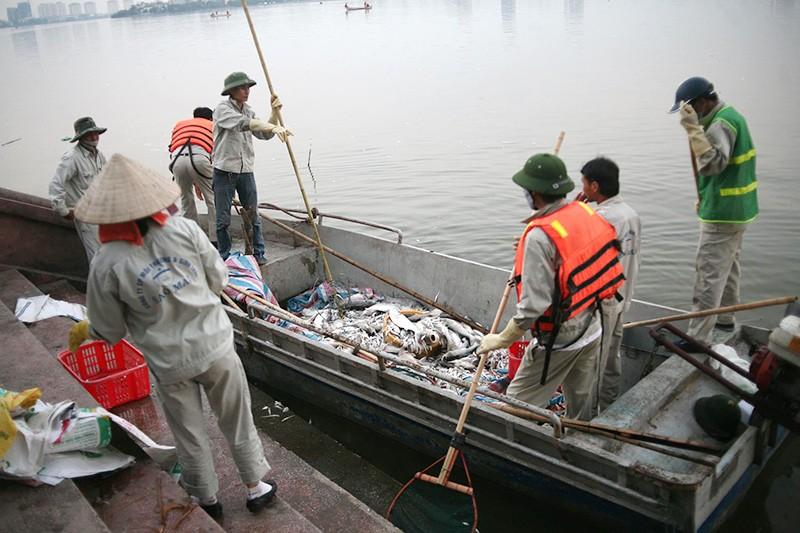 Cá chết ở Hồ Tây: Chủ tịch Nguyễn Đức Chung đi thị sát - ảnh 4