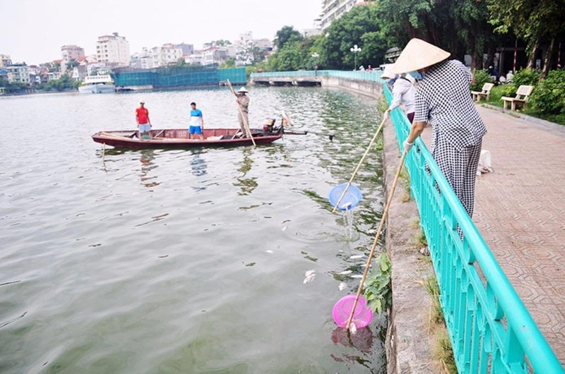 huy động vớt cá chết
