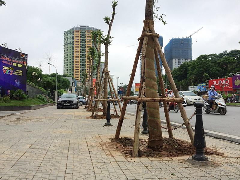 Chủ tịch Hà Nội: Phải học trồng cây xanh từ Trung Quốc - ảnh 2