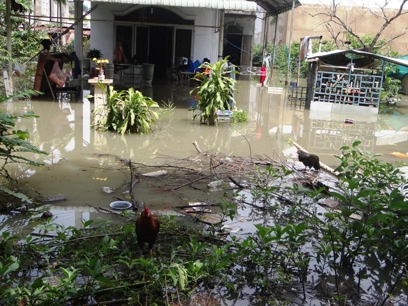 Cảnh ngập ở Sài Gòn chẳng khác chốn thôn quê - ảnh 4