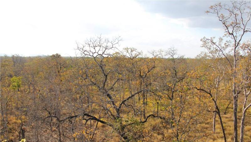 Vườn Quốc gia Yok Don mùa này có gì đẹp? - ảnh 3