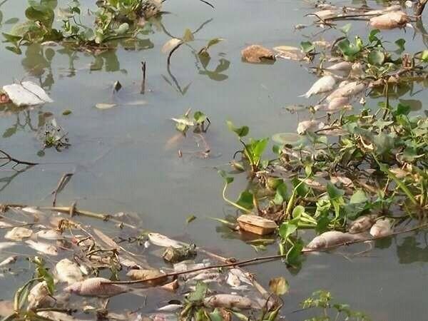 Lý giải nguyên nhân cá chết hàng loạt trên sông Đồng Nai - ảnh 1