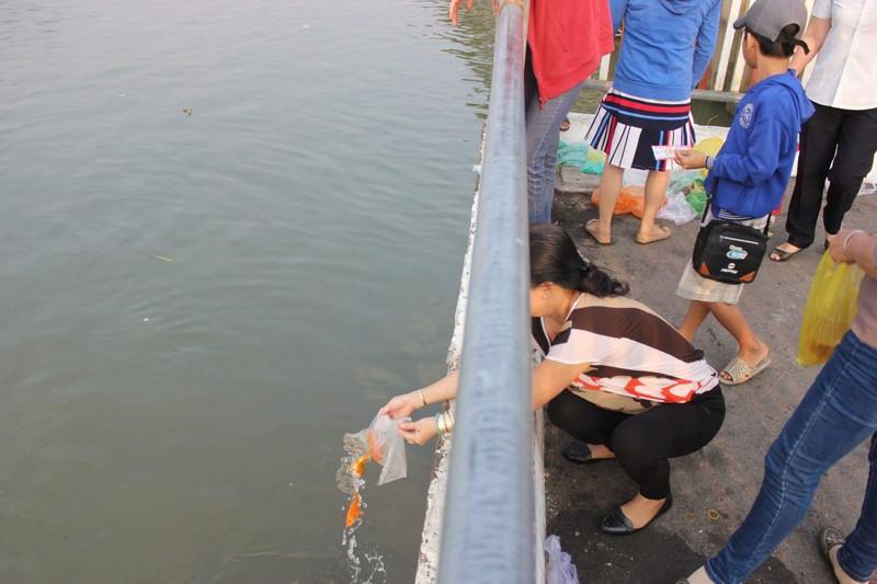 Những kiểu 'phóng sinh' bức tử cá chép - ảnh 2
