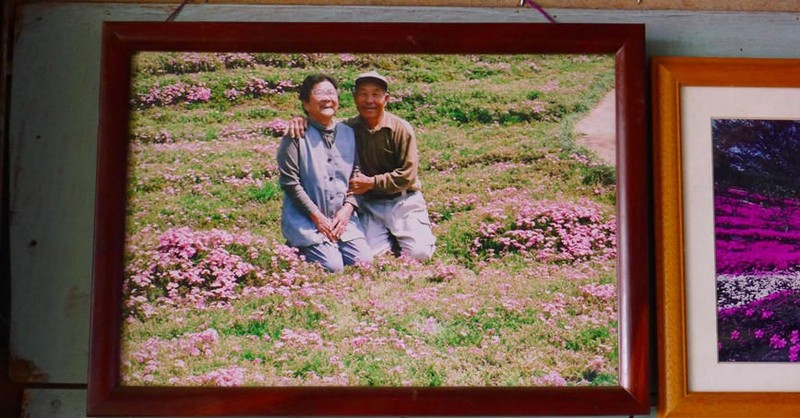 Cụ già trồng một đồi hoa để tặng người vợ mù - ảnh 6