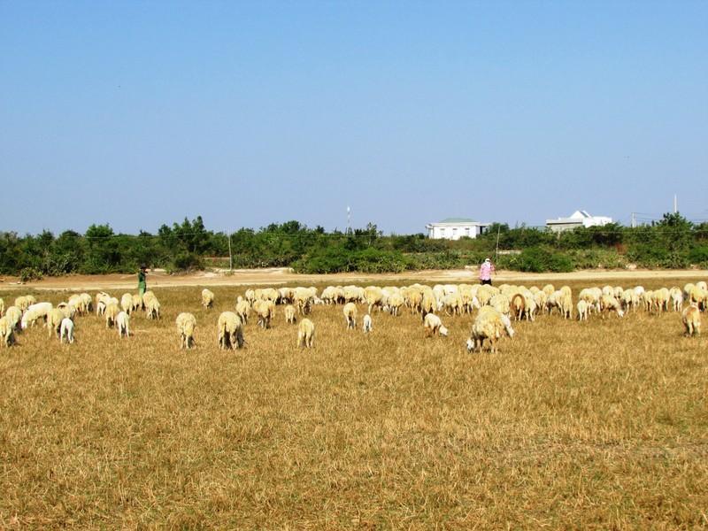 Hạn hán ở Ninh Thuận: Làm rẫy dưới lòng hồ vẫn thiếu nước - ảnh 1