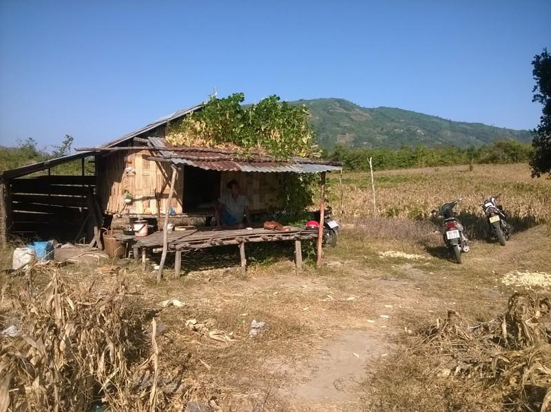 Hạn hán ở Ninh Thuận: Làm rẫy dưới lòng hồ vẫn thiếu nước - ảnh 5