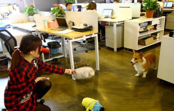Được phép mang thú cưng đến công sở để... giảm stress - ảnh 2
