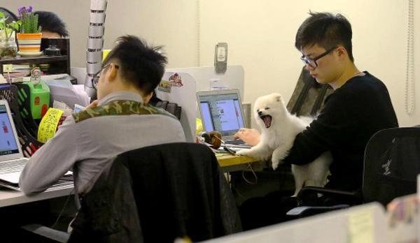 Được phép mang thú cưng đến công sở để... giảm stress - ảnh 1