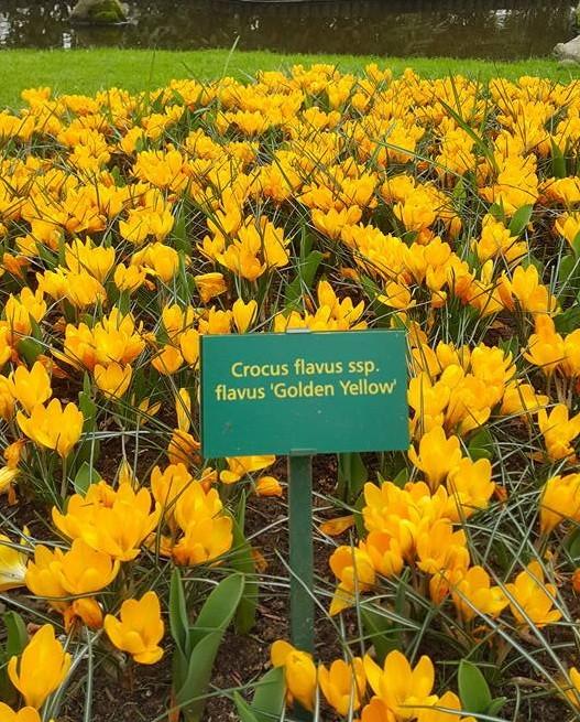 Ngắm 800 loài tulip rực rỡ tại hội hoa Keukenhof - ảnh 16