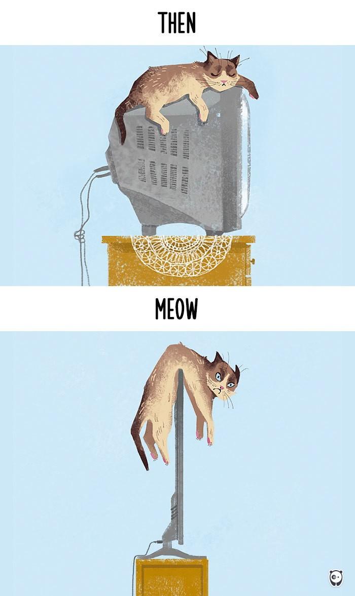 Công nghệ thay đổi cuộc sống loài mèo như thế nào - ảnh 1