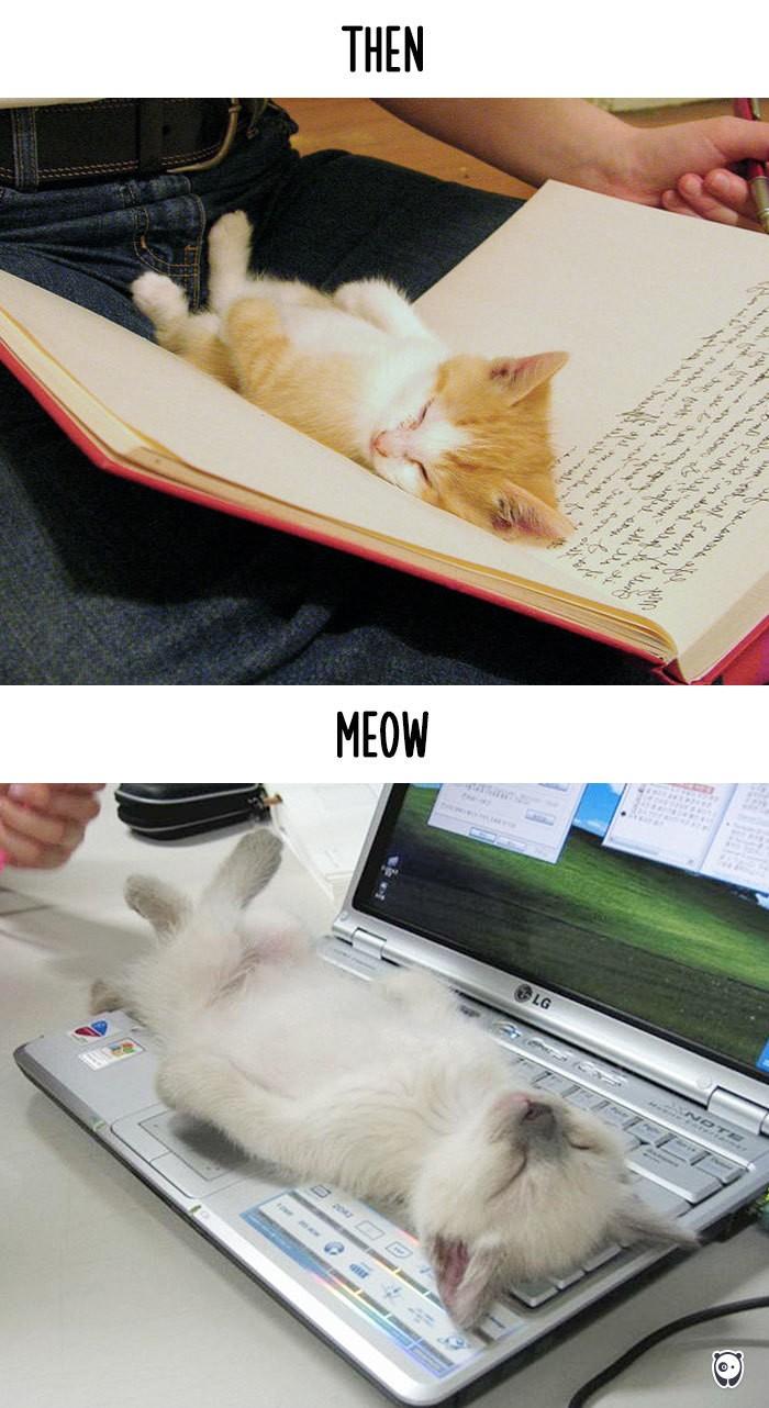 Công nghệ thay đổi cuộc sống loài mèo như thế nào - ảnh 2