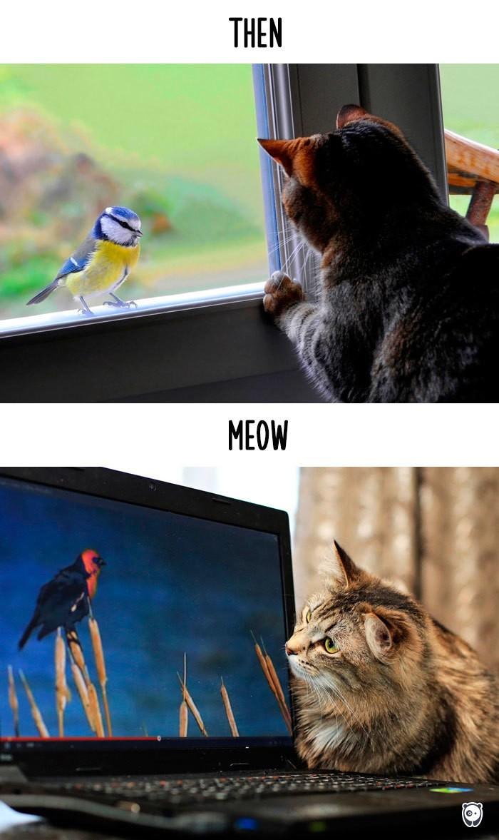 Công nghệ thay đổi cuộc sống loài mèo như thế nào - ảnh 4