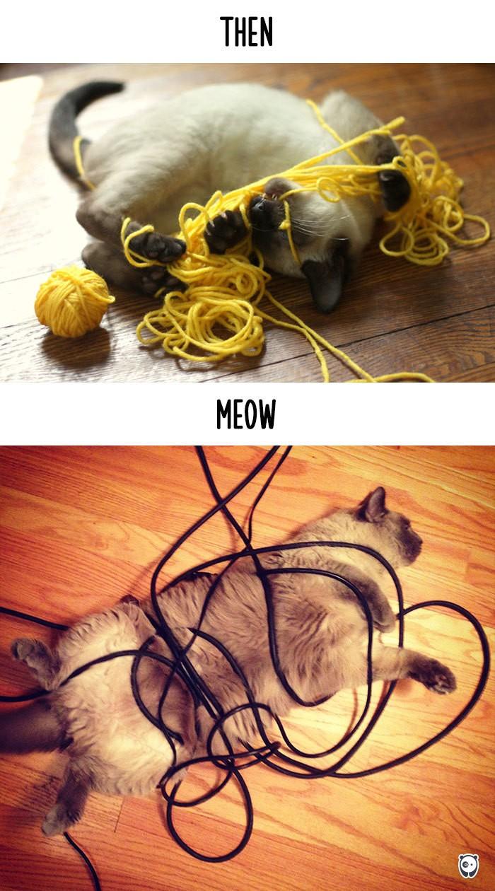 Công nghệ thay đổi cuộc sống loài mèo như thế nào - ảnh 5