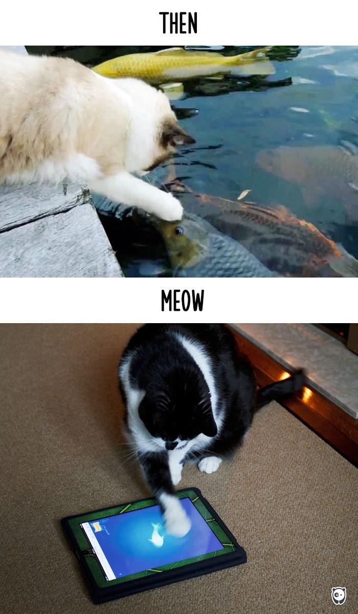 Công nghệ thay đổi cuộc sống loài mèo như thế nào - ảnh 6