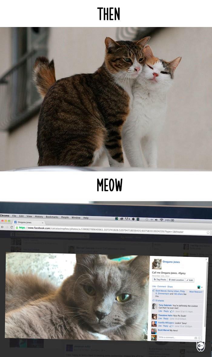 Công nghệ thay đổi cuộc sống loài mèo như thế nào - ảnh 7