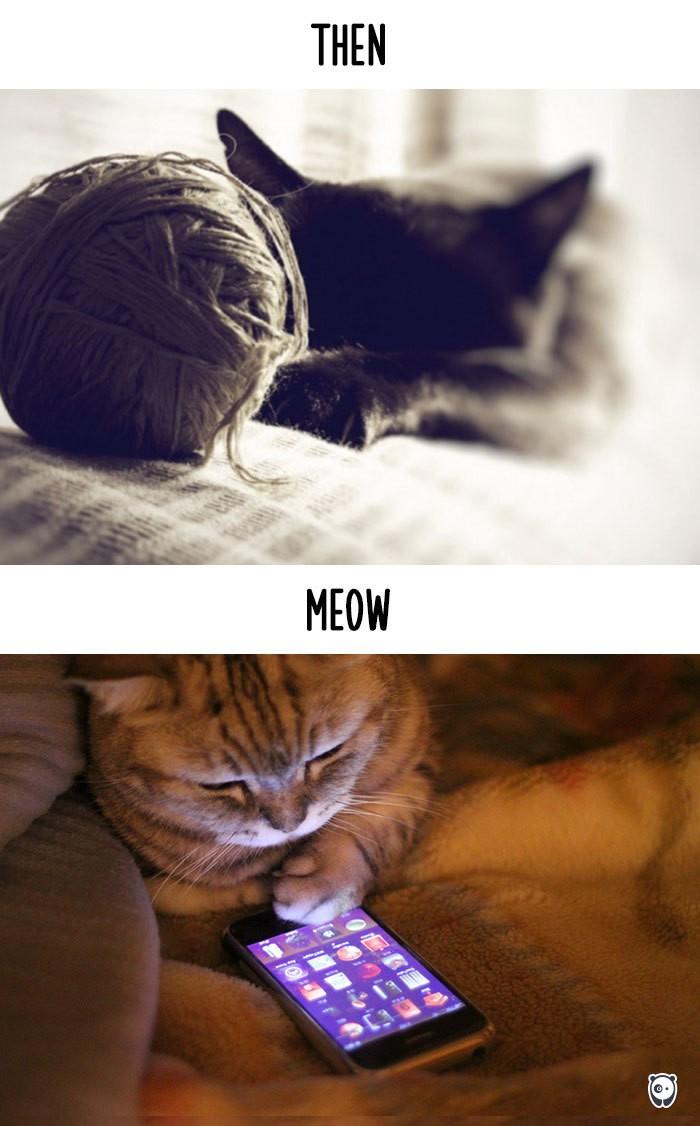 Công nghệ thay đổi cuộc sống loài mèo như thế nào - ảnh 8