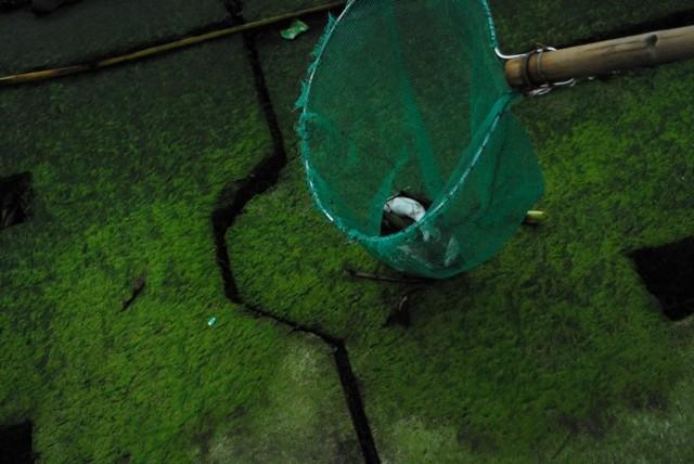 Chùm ảnh: Dân quân thu gom cá biển chết dạt vào bờ - ảnh 3