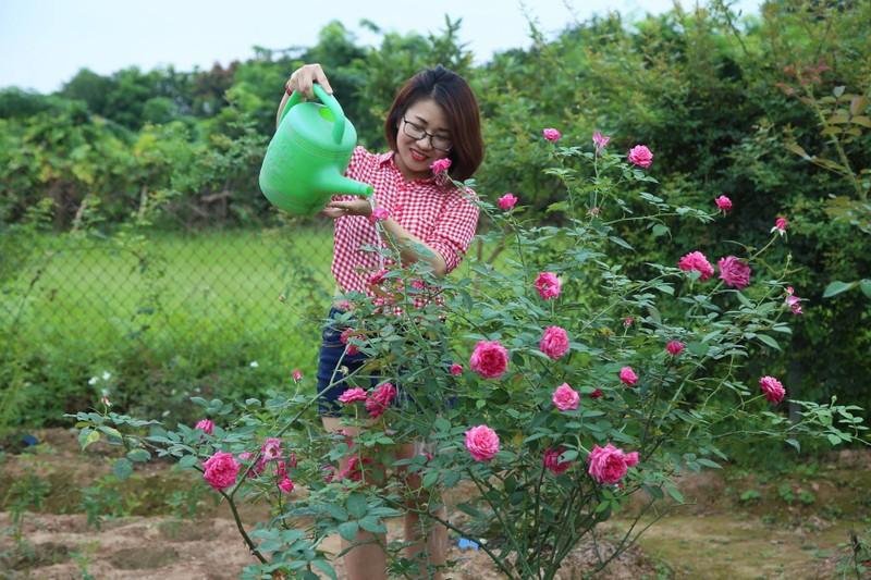 Ngắm khu vườn đẹp như mơ với hơn 100 loài hoa hồng - ảnh 5