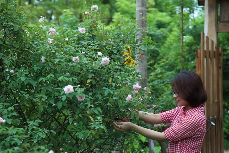 Ngắm khu vườn đẹp như mơ với hơn 100 loài hoa hồng - ảnh 7