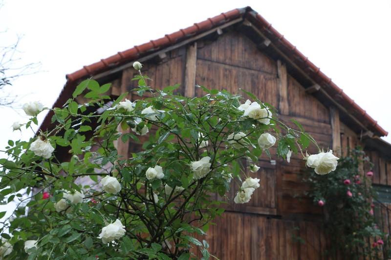 Ngắm khu vườn đẹp như mơ với hơn 100 loài hoa hồng - ảnh 9